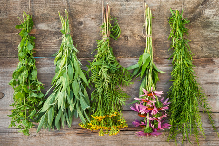 bunches of healing herbs on wooden wall, herbal medicine