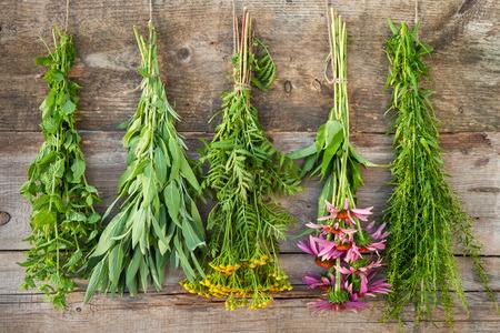Trauben von heilenden Kräutern auf Holzwand, Kräutermedizin