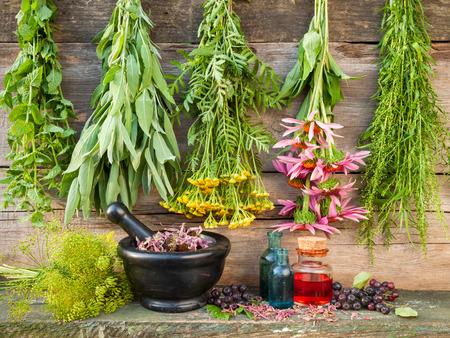 Trauben von heilenden Kräutern auf Holzwand, Mörtel mit getrockneten Pflanzen und Flaschen, Kräutermedizin