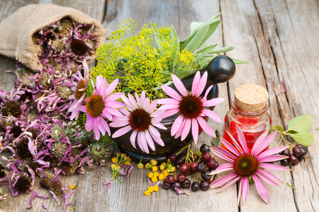 coneflowers: coneflowers and dill in mortar, vial with essential oil on wooden plank, herbal medicine