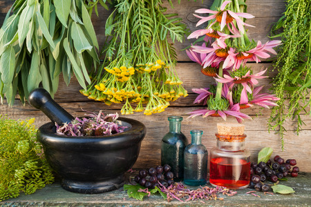 bunches of healing herbs on wooden wall, mortar, bottles and berries, herbal medicine