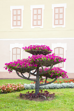 petunia: City landscape design. Flower pots with petunia on tree and flowerbed.