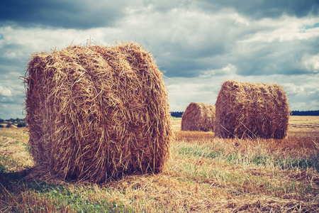 hay bales: Field with hay bales in cloudy weather Stock Photo