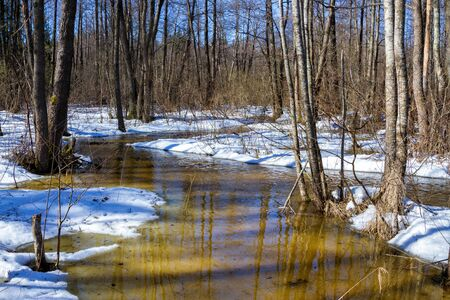 early spring snow: Early spring: river stream in forest. March belorussian landscape