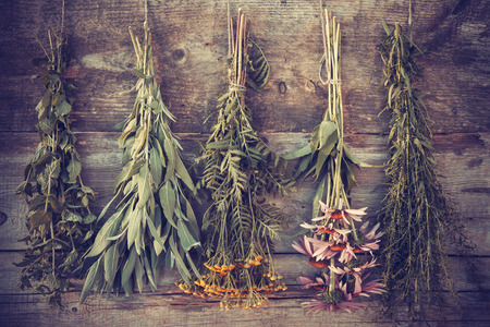 Vintage stylized photo of bunches of healing herbs on wooden wall, herbal medicine. Stockfoto
