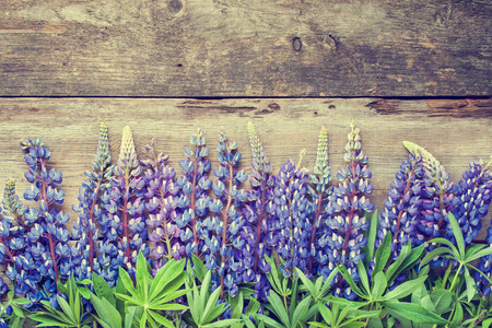 Blue lupines on wooden background. Retro styled photo.