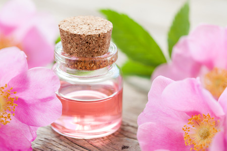 perfume oil: Bottle of essential roses oil and pink wild rose flowers.
