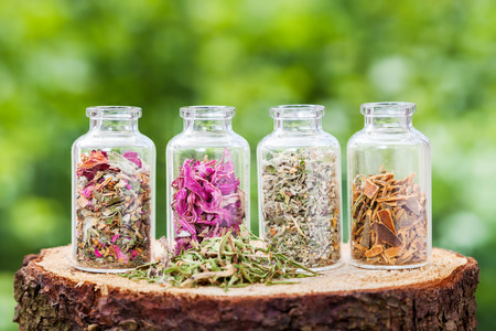 plant drug: Glass bottles with healing herbs on wooden stump on green background, herbal medicine.