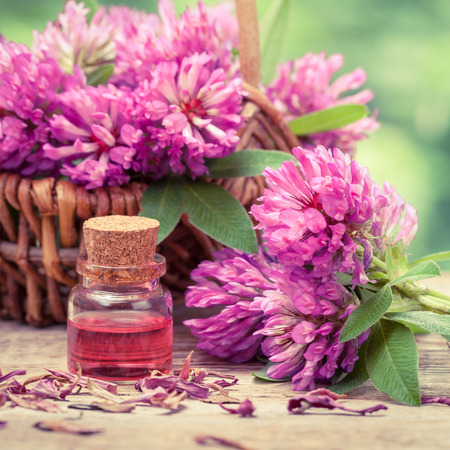 elixir: Bottle of elixir or essential oil and clover in basket. Retro stylized.