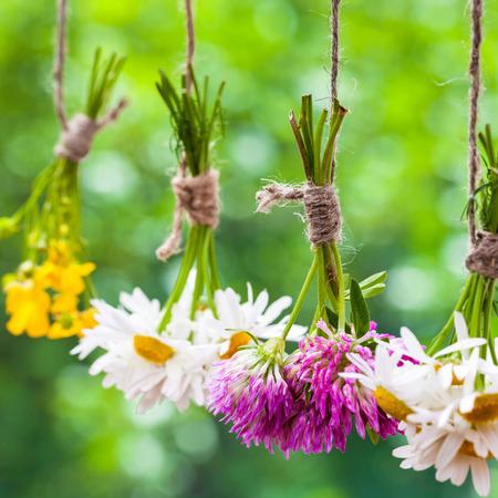 Healing herbs bunches. Focus on clover. Herbal medicine.