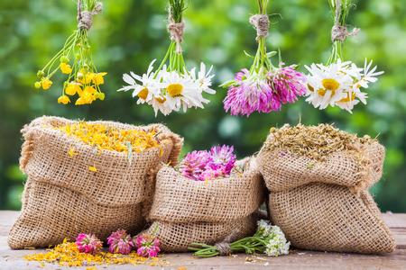 yerbas: Curación hierbas racimos y bolsas de arpillera con la maravilla seca, el trébol y la manzanilla en mesa de madera vieja. Medicina herbaria.