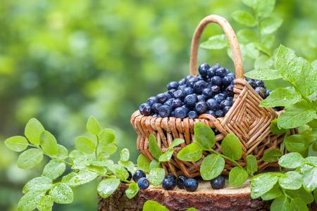 buisson: Panier avec les bleuets sur la souche en forêt sauvage