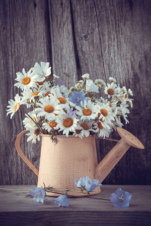 can: Watering can with summer bouquet of daisies flowers on wooden background. Retro stylized photo. Stock Photo