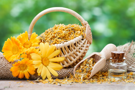Marigold flowers, basket with dried plants and bottles of essential calendula oil.