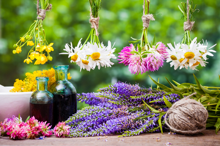 dried herbs: Hanging healing herbs bunches, bottles of tincture and mortar with flowers. Herbal medicine.
