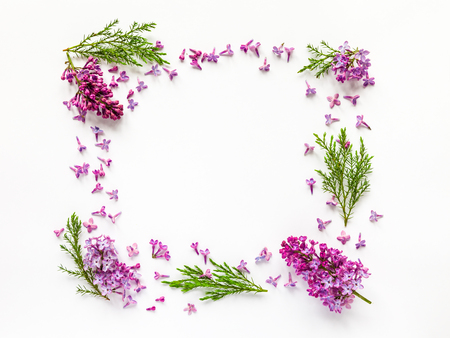 Floral border of fresh lilac flowers and juniper twigs on white. Flat lay, top view.