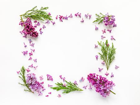 flores moradas: frontera floral de flores de color lila y ramitas frescas de enebro en blanco. aplanada, vista desde arriba.