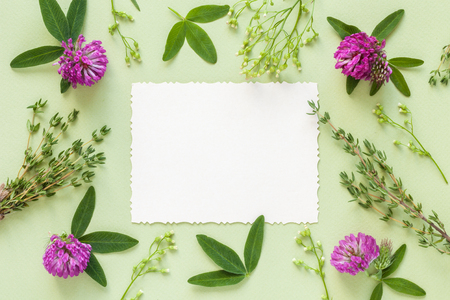 Old empty photo for the inside and frame of herbs and flowers on green background. Flat lay, top view. Stock Photo