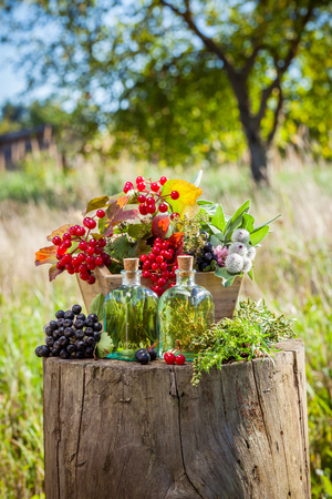 guelder: Transparent bottles of tincture, box of healthy herbs and berries outdoors, herbal medicine. Selective focus. Stock Photo