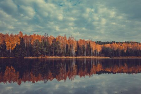 yellow trees: Autumn forest with yellow trees and lake, cloudy sky. Retro toned.
