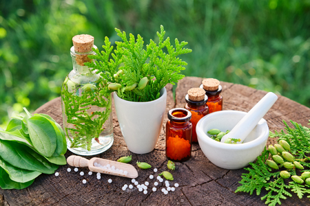Bottles of homeopathic globules, Thuja occidentalis, Plantago major drugs and mortar. Homeopathy medicine. Stock Photo - 81347898