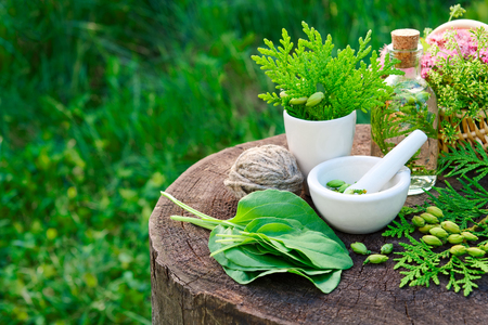 plantain herb: Bottle of Thuja infusion, tincture or oil, mortar and plantain leaves. Herbal medicine. Stock Photo