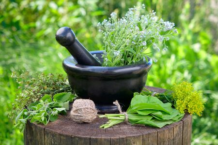 plantain herb: Bunches of healing herbs, mortar and pestle on stump outside.