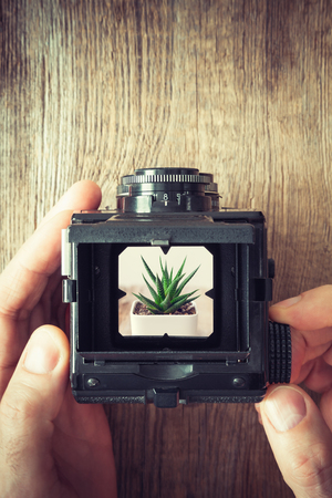 Photographers hands holding antique camera and shooting succulent. Top view.