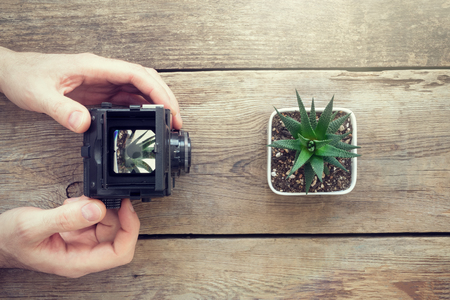 Photographer taking a picture of succulent using antique camera. Top view. Stock fotó