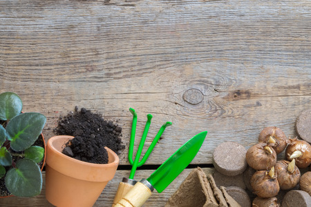 Flowerpot with ground, garden equipment for pot plants and bulbs of spring flowers. Copy space for text. Top view, flat lay.