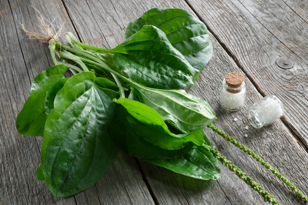 Bottles of homeopathic globules and Plantain - plantago major plant. Homeopathy medicine. Top view.