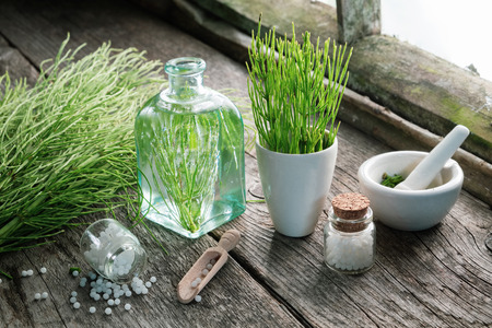 Horsetail healing herbs, bottle of equisetum infusion, mortar and bottles of homeopathic globules. Homeopathy and herbal medicine.