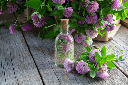 Bottle of clover tincture or infusion and clover flowers bunch in wooden crate.