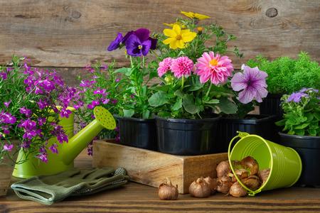 Seedlings of garden plants and flowers in flowerpots, bulbs of spring flowers Zdjęcie Seryjne