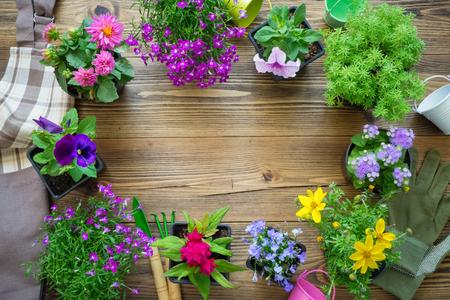 Seedlings of garden plants and nice flowers in flowerpots. Stock Photo - 115238498