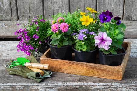 Seedlings of garden plants and flowerpots of flowers. Stock Photo - 115238499