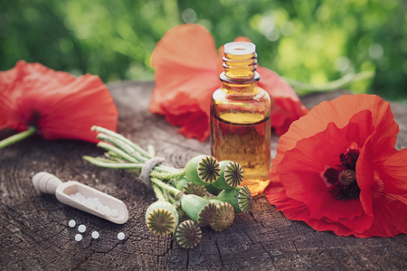 Poppies, poppy flower heads, bottle of infusion and scoop of homeopathic globules. Herbal or homeopathy medicine.