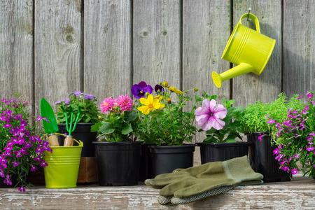 Seedlings of garden plants and beautiful flowers in flowerpots.