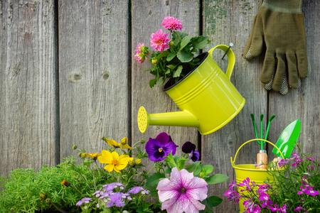 Seedlings of garden plants and flowers in flowerpots.