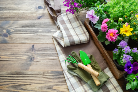 Seedlings of garden plants and flowers in flowerpots. Shovel, rake, gloves and apron. Top view. Copy space for text.