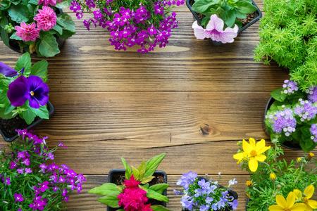 Decorative border from seedlings of garden plants and beautiful flowers in flowerpots.