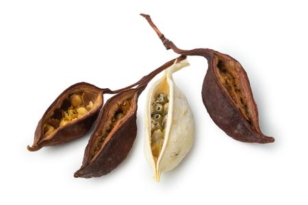 Dry exotic bean pods on white Stock Photo - 116465152