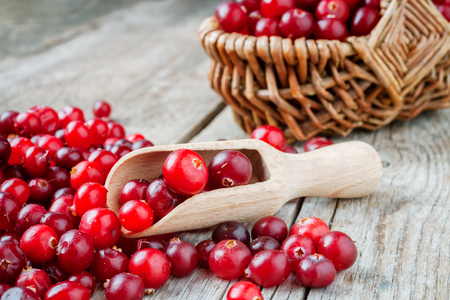Red ripe cranberries, wooden scoop and basket of berries on background. Stock Photo
