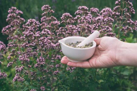 Woman holding in her hands a mortar of oregano herbs. Zdjęcie Seryjne
