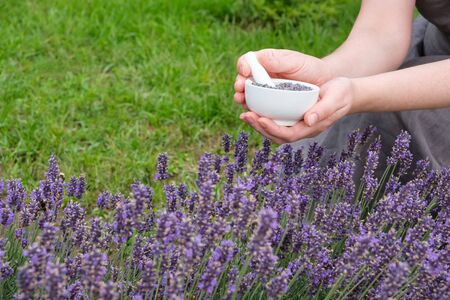 Woman holding in her hands a white mortar of lavender. 版權商用圖片