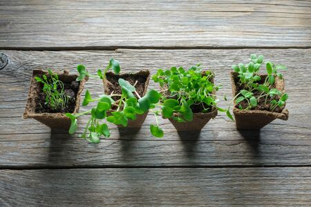 Green growing seedlings, sprouts of garden plants for planting. Top view.