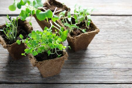 Green growing seedlings, sprouts of garden plants for planting.