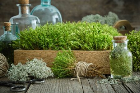 Healthy infusion bottles, wooden box of healthy common haircap moss, lichen, moss on wooden table. Herbal medicine. Stock Photo