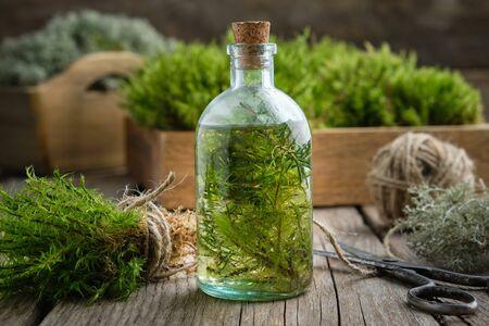 Healthy tincture of moss, lichen and juniper. Herbal medicine. Foto de archivo