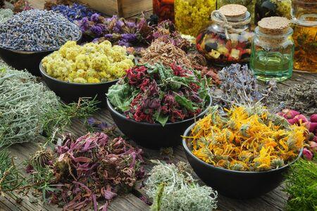 Bowls of dry medicinal herbs Фото со стока - 145315134